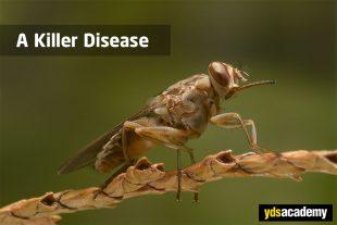 a-killer-disease